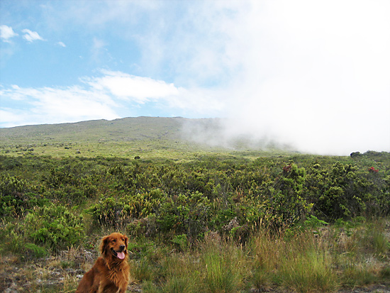 Beautiful Maui on a hike with our dog